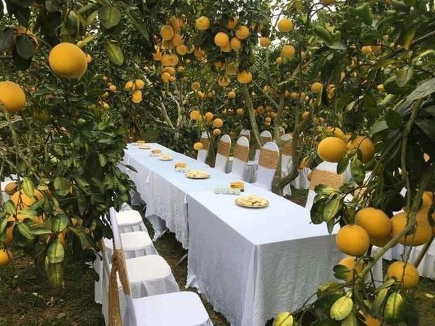 Bàn tiệc cưới bày giữa vườn trái cây ở miền Tây gây xôn xao khắp mạng xã hội, nhiều người gợi ý nên mang theo thứ đặc biệt này khi đến dự - Ảnh 2.