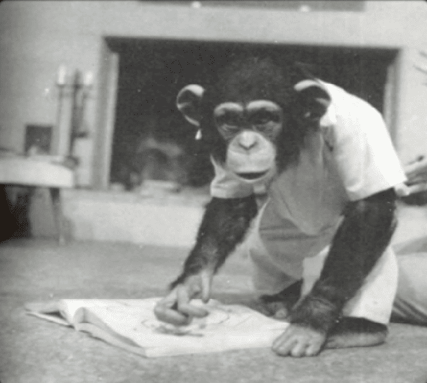 Được nhận nuôi từ thuở lọt lòng, con tinh tinh nghĩ mình là người, hoảng loạn lúc gặp đồng loại và cái kết buồn khi được trả về thế giới hoang dã - Ảnh 1.