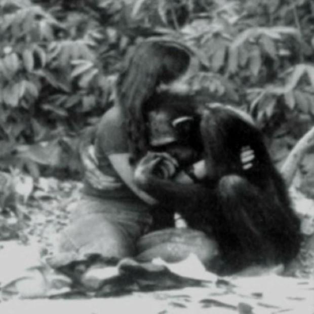 Được nhận nuôi từ thuở lọt lòng, con tinh tinh nghĩ mình là người, hoảng loạn lúc gặp đồng loại và cái kết buồn khi được trả về thế giới hoang dã - Ảnh 3.