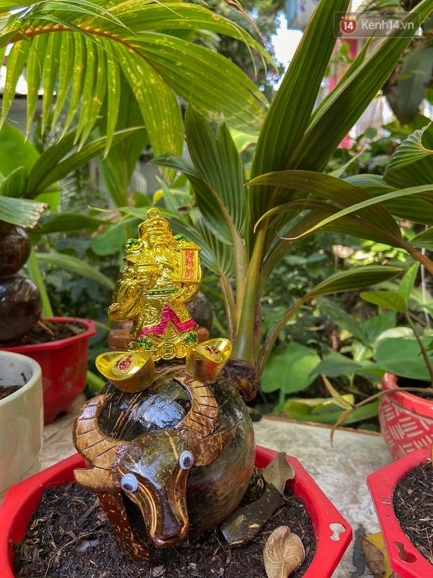 Độc đáo dừa bonsai hình con trâu khiến người Sài Gòn bỏ hàng triệu đồng mua chơi Tết Tân Sửu 2021 - Ảnh 6.