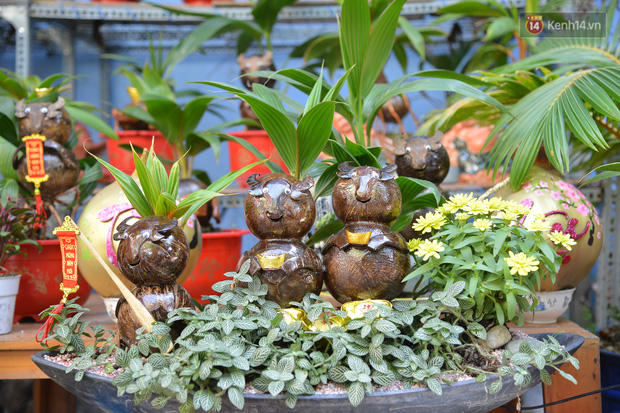Độc đáo dừa bonsai hình con trâu khiến người Sài Gòn bỏ hàng triệu đồng mua chơi Tết Tân Sửu 2021 - Ảnh 1.