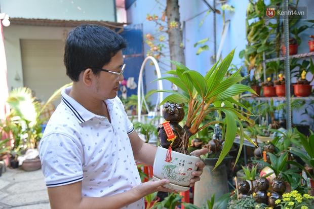 Độc đáo dừa bonsai hình con trâu khiến người Sài Gòn bỏ hàng triệu đồng mua chơi Tết Tân Sửu 2021 - Ảnh 15.