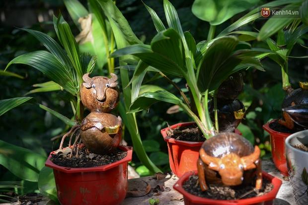 Độc đáo dừa bonsai hình con trâu khiến người Sài Gòn bỏ hàng triệu đồng mua chơi Tết Tân Sửu 2021 - Ảnh 13.