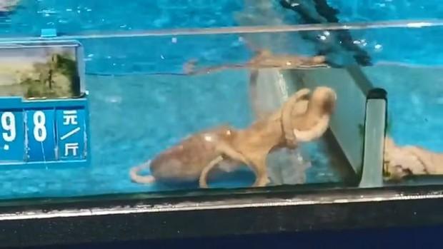 Tủi thân phận nhà nghèo, chú bạch tuộc bơi sang bể đắt tiền để đánh đu vào giới thượng lưu - Ảnh 3.