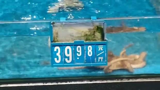 Tủi thân phận nhà nghèo, chú bạch tuộc bơi sang bể đắt tiền để đánh đu vào giới thượng lưu - Ảnh 4.