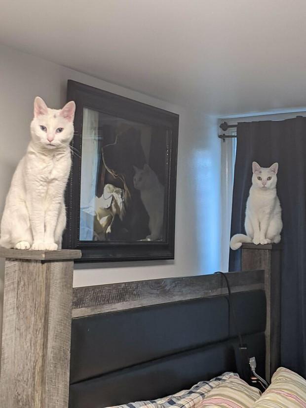Tuyển tập hội những ông mèo nghịch hơn quỷ sứ, nghịch tới nỗi chủ nhân phải lập group để bóc phốt mới sợ - Ảnh 19.