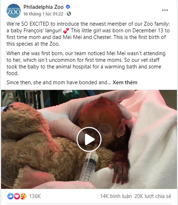 Bé khỉ Mỹ sinh ra đã bị mẹ bỏ rơi, được nhân viên vườn thú đặt tên tiếng Việt cực đáng yêu khiến trăm nghìn dân mạng lịm tim - Ảnh 5.
