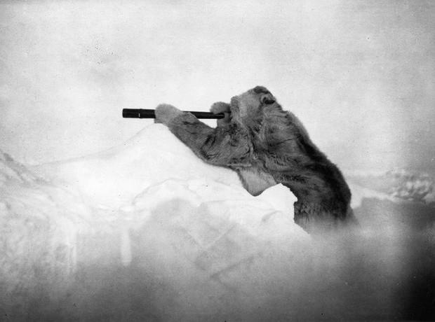 Những bức ảnh làm nên lịch sử hơn 1 thế kỷ của National Geographic có thể bạn chưa được thấy: Thế giới động vật hay con người đều để lại ấn tượng khó phai - Ảnh 1.