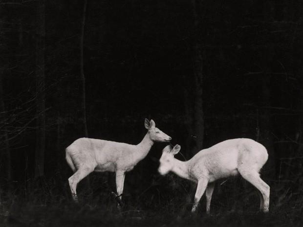 Những bức ảnh làm nên lịch sử hơn 1 thế kỷ của National Geographic có thể bạn chưa được thấy: Thế giới động vật hay con người đều để lại ấn tượng khó phai - Ảnh 2.