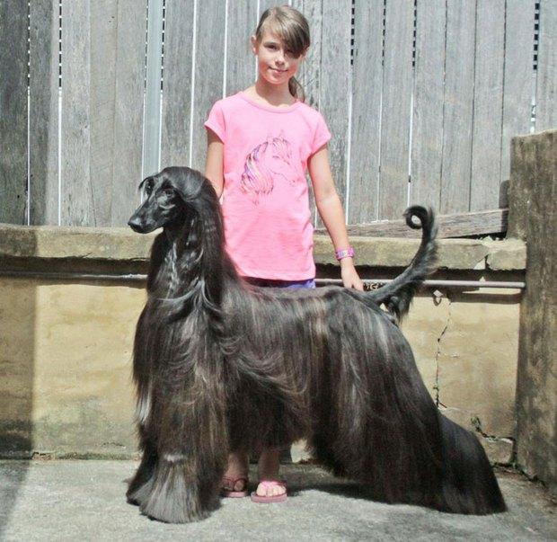 Nàng hậu chó sở hữu bộ lông suôn dài, bóng mượt như thác nước chảy ra, nhìn đã thấy mê chạm tay vào lại càng phê - Ảnh 3.