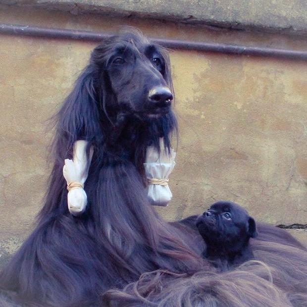 Nàng hậu chó sở hữu bộ lông suôn dài, bóng mượt như thác nước chảy ra, nhìn đã thấy mê chạm tay vào lại càng phê - Ảnh 5.