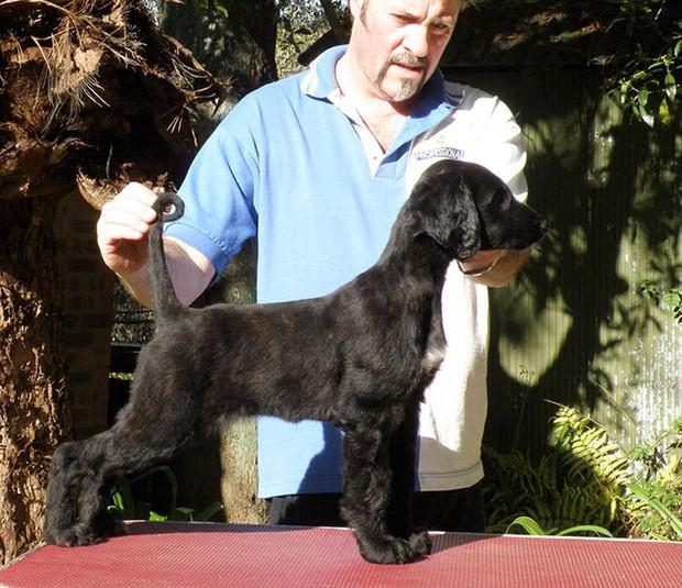 Nàng hậu chó sở hữu bộ lông suôn dài, bóng mượt như thác nước chảy ra, nhìn đã thấy mê chạm tay vào lại càng phê - Ảnh 6.