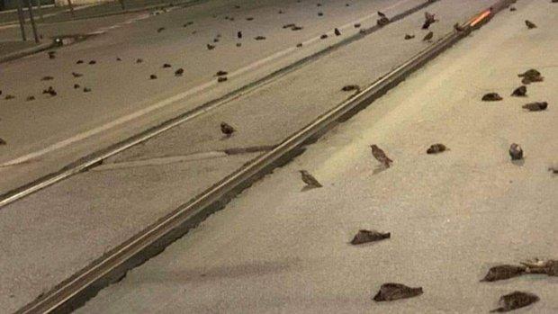 Chim chóc bỗng nhiên chết la liệt trên đường phố tại Ý, nguyên nhân vì một đặc sản có trong đêm giao thừa - Ảnh 1.