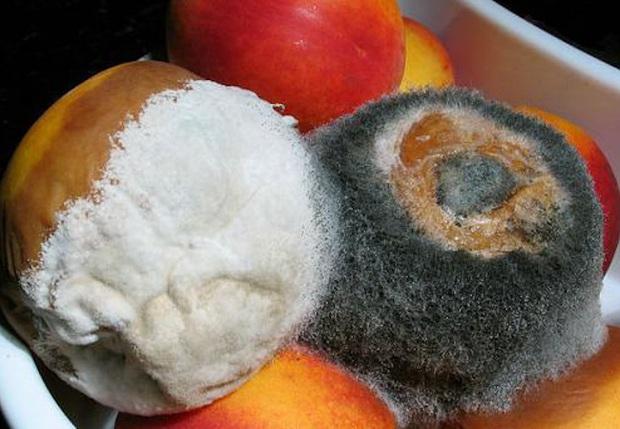 4 loại thực phẩm chứa đầy vi khuẩn trong căn bếp, dù có rửa sạch hay đun sôi thì cũng đừng cố ăn - Ảnh 3.
