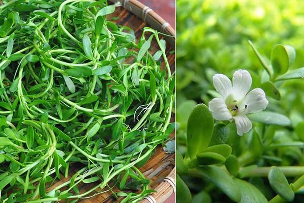 Những loại rau mọc dại khắp các vùng quê Việt Nam cực hiếm người biết, ngày nay được săn lùng vì quý như vàng (Phần 2) - Ảnh 3.