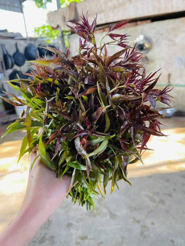 Những loại rau mọc dại khắp các vùng quê Việt Nam cực hiếm người biết, ngày nay được săn lùng vì quý như vàng (Phần 2) - Ảnh 5.