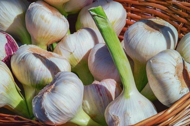 2 loại rau củ mọc mầm không những không độc mà dinh dưỡng còn tăng lên gấp bội, đừng lãng phí nó - Ảnh 3.