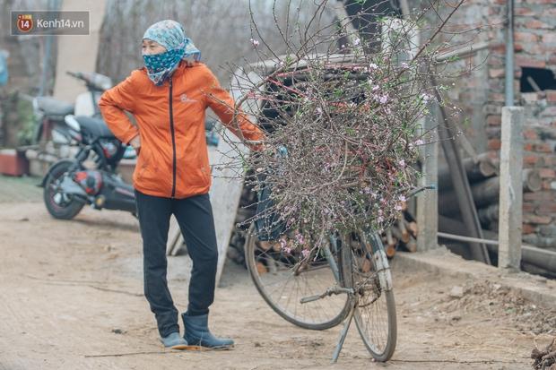 Ảnh: Trời lạnh sương mờ, làng đào Nhật Tân khoe sắc, đúng là Tết đang đến rất gần rồi! - Ảnh 8.