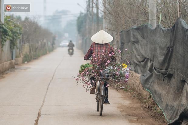 Ảnh: Trời lạnh sương mờ, làng đào Nhật Tân khoe sắc, đúng là Tết đang đến rất gần rồi! - Ảnh 10.