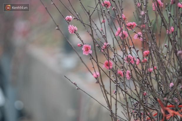 Ảnh: Trời lạnh sương mờ, làng đào Nhật Tân khoe sắc, đúng là Tết đang đến rất gần rồi! - Ảnh 4.