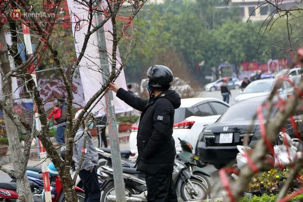 """Hà Nội: Những cành đào rừng Sơn La được dán tem đầu tiên """"rủng rỉnh"""" xuống phố chờ khách mua về chơi Tết - Ảnh 8."""