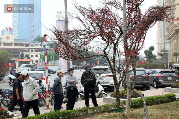 """Hà Nội: Những cành đào rừng Sơn La được dán tem đầu tiên """"rủng rỉnh"""" xuống phố chờ khách mua về chơi Tết - Ảnh 1."""