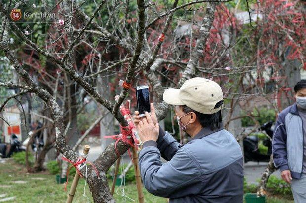 """Hà Nội: Những cành đào rừng Sơn La được dán tem đầu tiên """"rủng rỉnh"""" xuống phố chờ khách mua về chơi Tết - Ảnh 13."""
