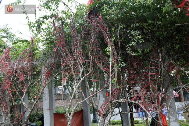 """Hà Nội: Những cành đào rừng Sơn La được dán tem đầu tiên """"rủng rỉnh"""" xuống phố chờ khách mua về chơi Tết - Ảnh 7."""
