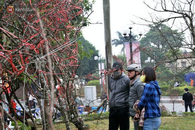 """Hà Nội: Những cành đào rừng Sơn La được dán tem đầu tiên """"rủng rỉnh"""" xuống phố chờ khách mua về chơi Tết - Ảnh 16."""