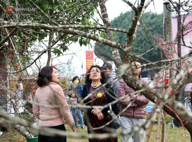 """Hà Nội: Những cành đào rừng Sơn La được dán tem đầu tiên """"rủng rỉnh"""" xuống phố chờ khách mua về chơi Tết - Ảnh 18."""