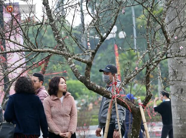 """Hà Nội: Những cành đào rừng Sơn La được dán tem đầu tiên """"rủng rỉnh"""" xuống phố chờ khách mua về chơi Tết - Ảnh 15."""