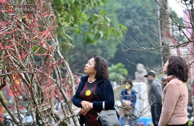 """Hà Nội: Những cành đào rừng Sơn La được dán tem đầu tiên """"rủng rỉnh"""" xuống phố chờ khách mua về chơi Tết - Ảnh 20."""