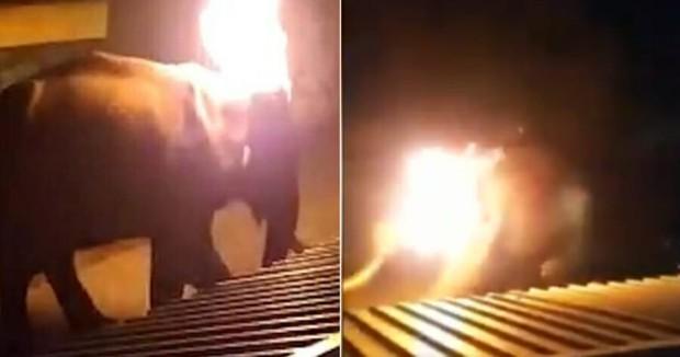 Cụ voi 40 tuổi chết tức tưởi sau khi bị người dân ném lốp xe cháy rực lên người, cảnh tượng con vật hoảng loạn trốn chạy khiến dư luận dậy sóng - Ảnh 1.