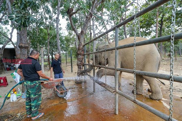 Mục kích những chú voi con hiếm hoi còn lại ở Đắk Lắk - Ảnh 5.