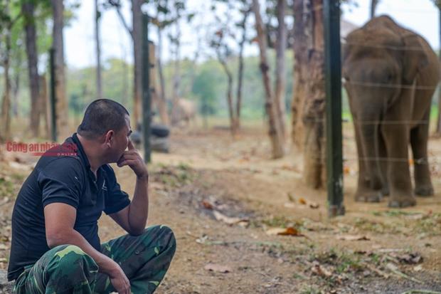 Mục kích những chú voi con hiếm hoi còn lại ở Đắk Lắk - Ảnh 9.