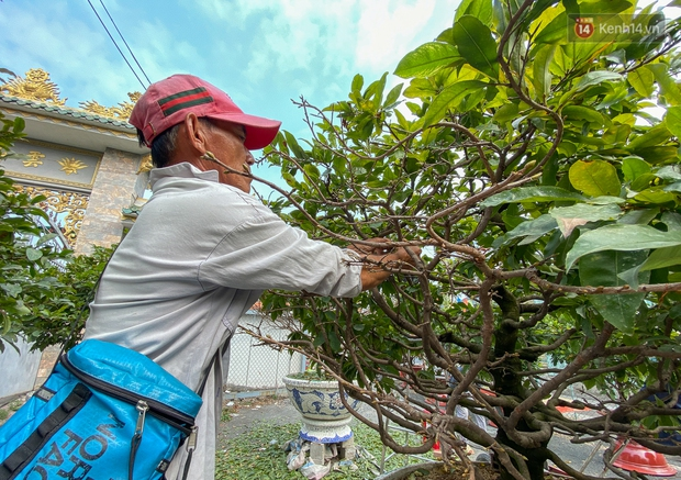 Bỏ 200 triệu thuê 30 người lặt lá mai vài ngày đón Tết Tân Sửu 2021 - Ảnh 9.