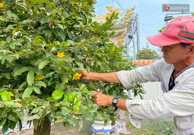 Bỏ 200 triệu thuê 30 người lặt lá mai vài ngày đón Tết Tân Sửu 2021 - Ảnh 10.