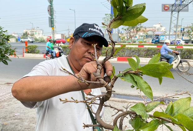 Bỏ 200 triệu thuê 30 người lặt lá mai vài ngày đón Tết Tân Sửu 2021 - Ảnh 12.
