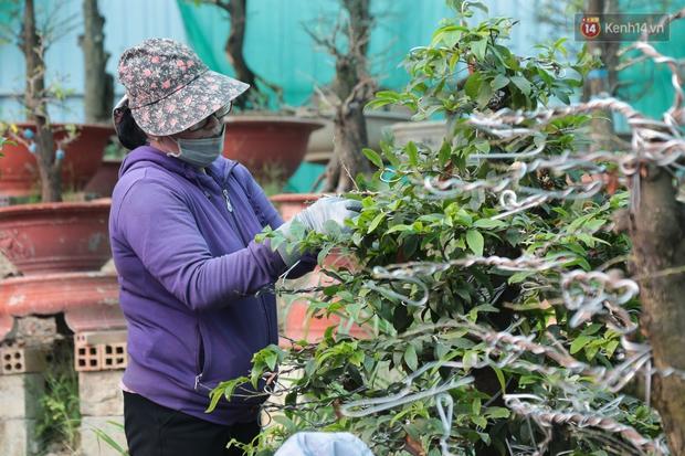 Bỏ 200 triệu thuê 30 người lặt lá mai vài ngày đón Tết Tân Sửu 2021 - Ảnh 3.