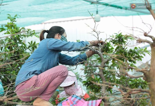 Bỏ 200 triệu thuê 30 người lặt lá mai vài ngày đón Tết Tân Sửu 2021 - Ảnh 4.