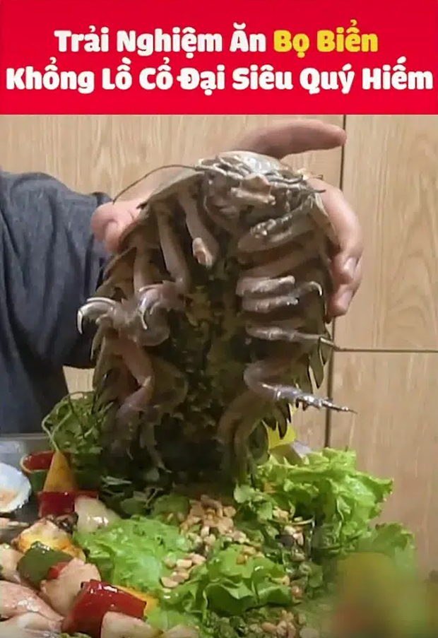 Dân mạng sởn gai ốc với màn review ăn thử món bọ biển khổng lồ giá 4 triệu/con, thịt của chúng liệu có ngon như tưởng tượng? - Ảnh 1.