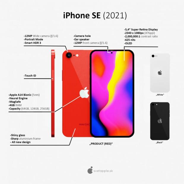 Phiên bản thu nhỏ của iPhone 12: iPhone SE Plus lộ thông số kỹ thuật và giá bán, dự kiến ra mắt tháng 3/2021 - Ảnh 2.