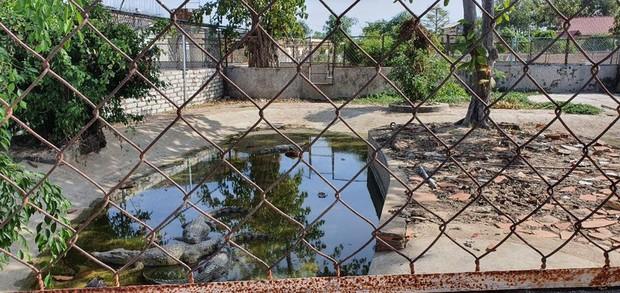 Nghi 2 con cá sấu nặng gần 100kg bơi lập lờ trong hồ nước ở Vũng Tàu: Tìm kiếm, thuê thợ vây bắt - Ảnh 3.