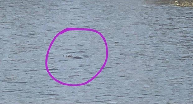 Nghi 2 con cá sấu nặng gần 100kg bơi lập lờ trong hồ nước ở Vũng Tàu: Tìm kiếm, thuê thợ vây bắt - Ảnh 1.