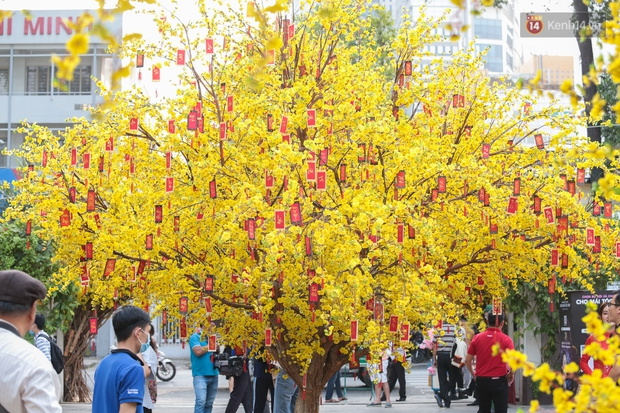 Bà đồ xinh đẹp mặc áo dài, viết thư pháp tại đường hoa mai ở Sài Gòn thu hút nhiều người - Ảnh 6.