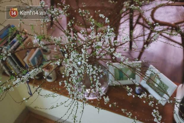 Trọn bộ bí kíp chơi tuyết mai rừng đẹp mê suốt 1 tháng: Ai muốn có hoa rẻ - đẹp - bền Tết này nên thuộc lòng - Ảnh 3.