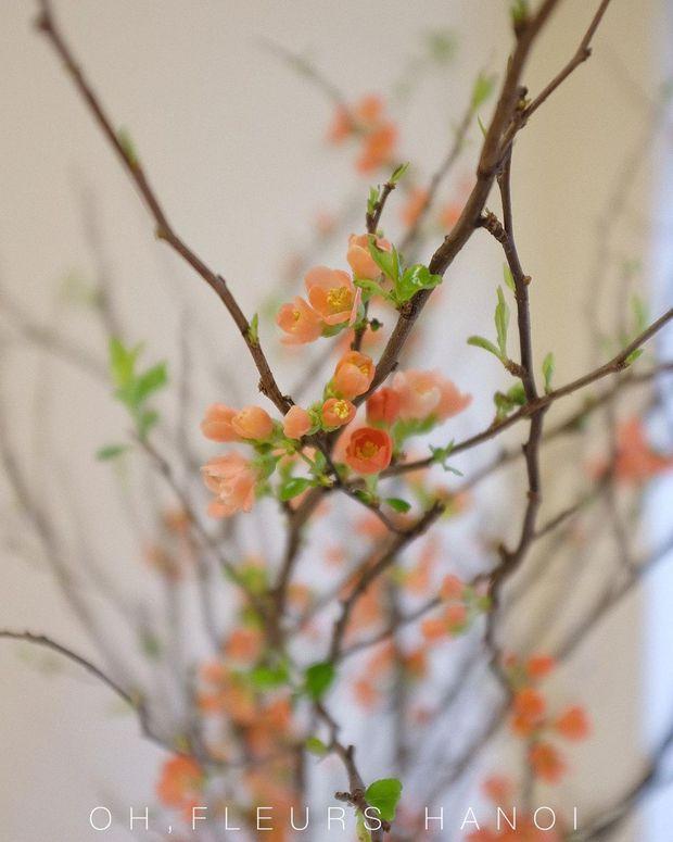 Nàng thơ làng hoa Tết gọi tên đào cam: Đẹp mê ly rụng rời, giá từ 300K - Ảnh 2.