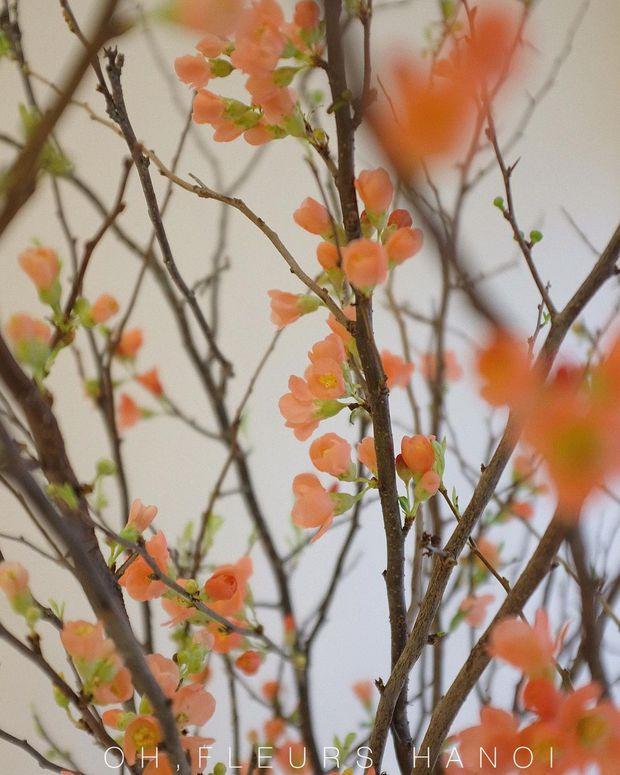 Nàng thơ làng hoa Tết gọi tên đào cam: Đẹp mê ly rụng rời, giá từ 300K - Ảnh 3.