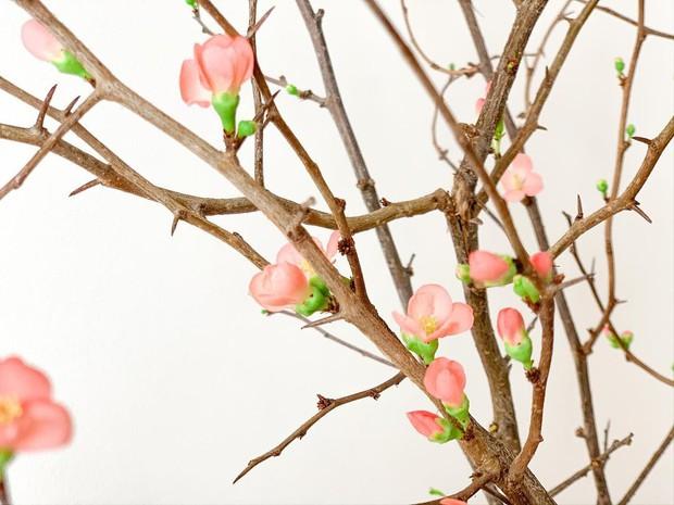 Nàng thơ làng hoa Tết gọi tên đào cam: Đẹp mê ly rụng rời, giá từ 300K - Ảnh 1.