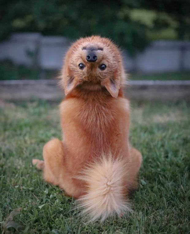 Chú chó sở hữu tuyệt kỹ của loài cú, biết vặn đầu 180 độ ra sau lưng khiến bà con xóm phố sợ chết khiếp - Ảnh 2.